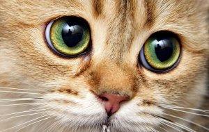 Перечень болезней глаз у кошек и их причины