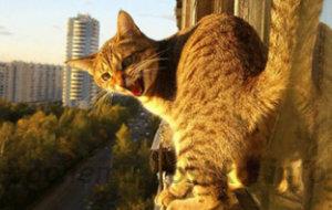 Кошка упала с высоты – возможные травмы и первая помощь до приезда врача