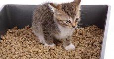 Учим котенка ходить в туалет – рекомендации и описание быстрого метода
