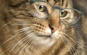 Сколько лет вашей кошке по человеческим меркам и что влияет на продолжительность ее жизни?
