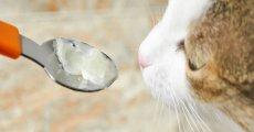 Вазелиновое масло при запорах у кошек: экстренная помощь животному