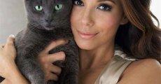 Корм для кошек «Sheba» – рацион от кутюррр!