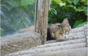Удивительные кошки (Еще раз об интеллекте кошки)