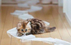 Почему котенок гадит в неположенном месте и как исправить его плохое поведение?
