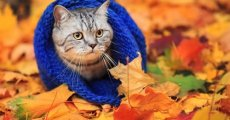Кашель у кошки – один из признаков простуды