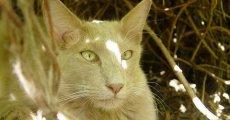 Кошка с острова Ява