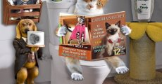 Причины возникновения энтерита у кошек и способы лечения