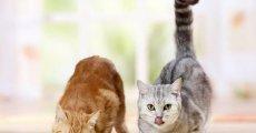 Обсуждаем марку ямс – корм для кошек и котят