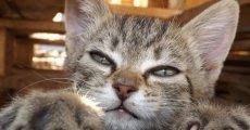 Удалять ли кошке когти, и к каким последствиям это может привести?