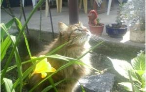Хозяйка нашего двора