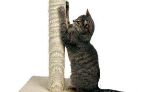 Когтеточка для кошек: как приучить и какую выбрать