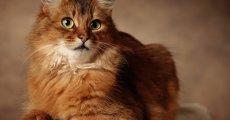 Причины, симптомы и лечение авитаминоза у кошек