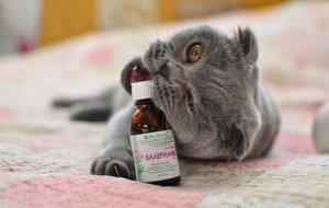 Валерьянка и кошка – поить или не поить?