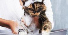 Почему кошка боится воды и как ее можно приучить к водным процедурам?