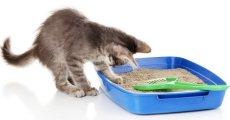 Как выбрать наполнитель – рейтинг средств для кошачьего туалета
