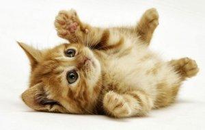 Практические советы по воспитанию котят – питаемся, купаемся и слушаем хозяина
