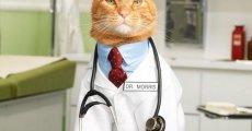 Каким образом кошки лечат болезни людей?