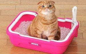 Запор у кота: по секрету всему свету