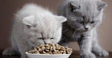 Качественные сухие корма для кошек – делаем осознанный выбор и составляет рацион правильно