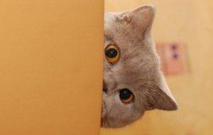 Как помочь кошке справиться со своими страхами?