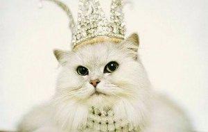 Самые красивые кошки в мире: топ-10