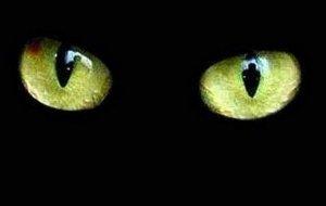 Кто такой Ешкин кот?