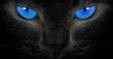 А вам интересно, какие цвета видят кошки?