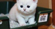 Колит у кошки: симптомы расстройства пищеварения