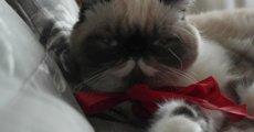 Кровь в кале у кота: в чем причина появления