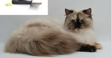 Колтунорез – каталог кошачьих аксессуаров и правила использования