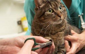 Когтерезка для кошек: виды и правила эксплуатации