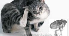 Как вывести блох у котенка, лечение и симптомы блох у кошек