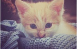 Кот – юзер, или «вставай и покорми меня!»