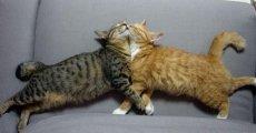 Пиометра у кошки: как не потерять питомца?