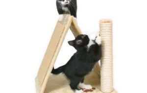 Приучаем котенка точить когти об когтеточку – экспресс-метод