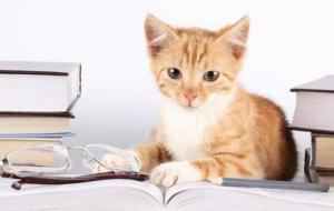 Прививаем котенку самостоятельность и хорошее воспитание