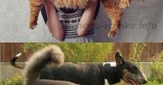 Порода кошек мейн кун –  расцветки, внешний вид, выбор котенка