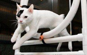 Как дрессировать кошку: основные правила и подходящие команды