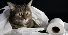 Обзор кошачьих туалетов – от обычного лотка до самоочищающейся конструкции