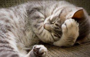 Сколько кошки спят в сутки и о чем говорит выбранное для сна место?