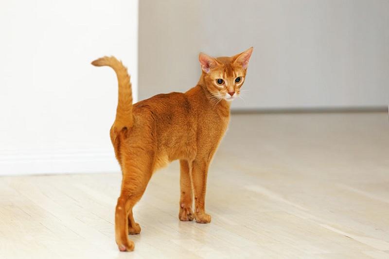 картинки котенок худой сезон
