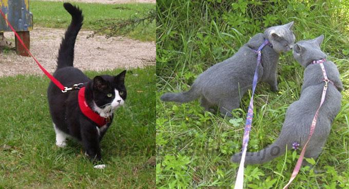 как одеть шлейку на кота пошаговая инструкция фото - фото 8
