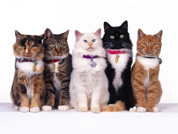 разнообразные ошейники для кошек