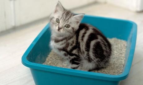 Не проводите с котенком никаких манипуляций и процедур, когда тот готовится к туалету, сидит в нем и сразу после испражнения