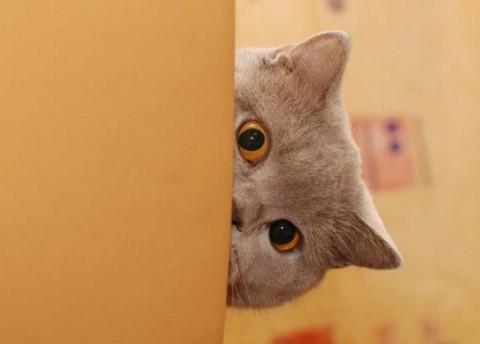 Чего боятся кошки?