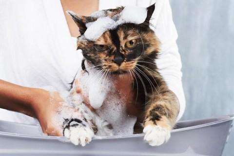 Кошки не любят воду