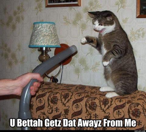 Кошка нападает на пылесос
