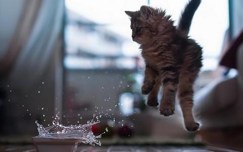 Котенок не любит воду