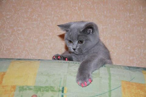 Котенок в антицарапках