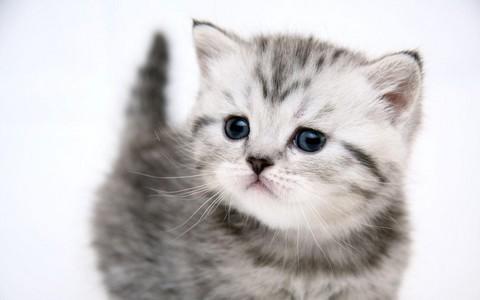 Котята чувствительны к новым запахам